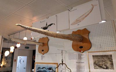 Izlandi péniszmúzeum, ahol minden ARRÓL szól 18+