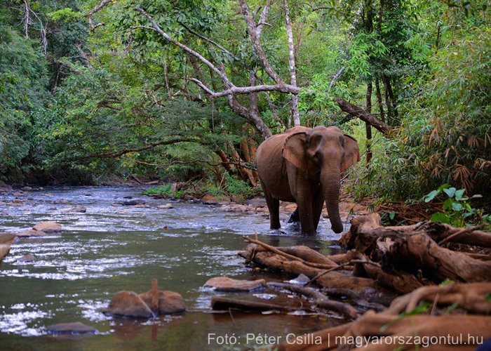 Ázsia Kambodzsa elefánt