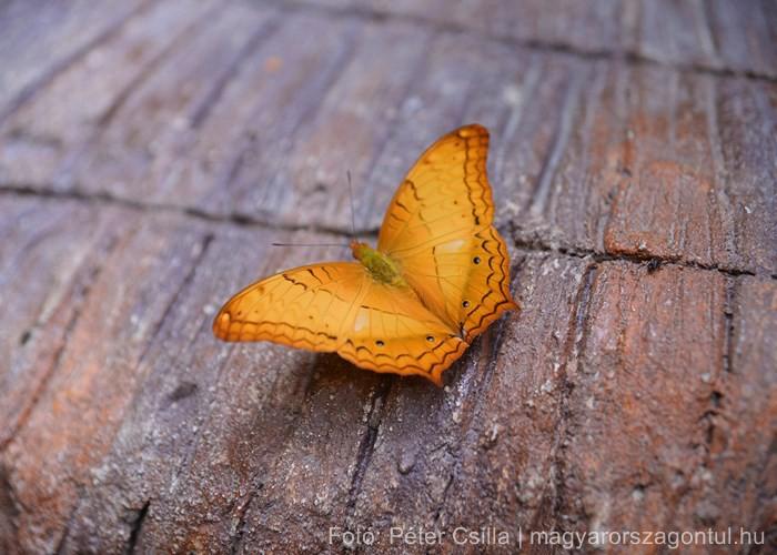 Erawan vízesés pillangó