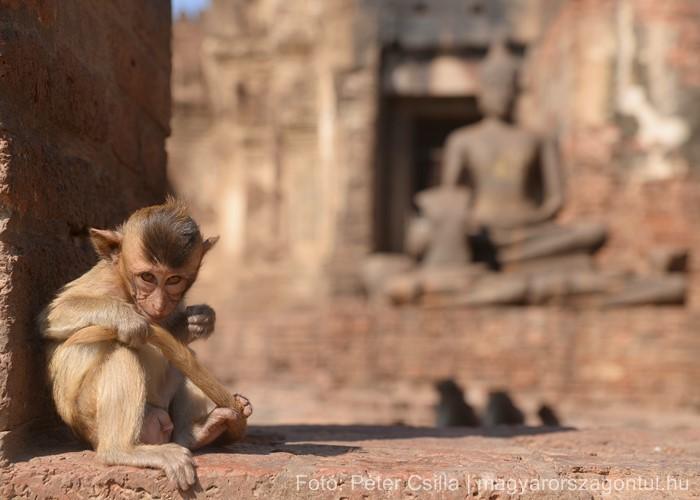 Majmok Temploma Thaiföld