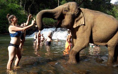 6+1 állati útitárs a legjobb nyaralásokhoz