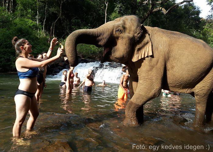 Kambodzsa elefánt