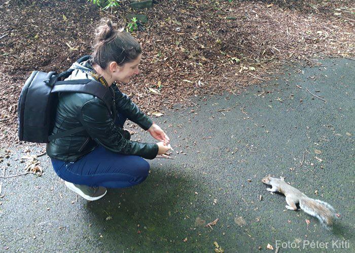 Skócia mókuspark