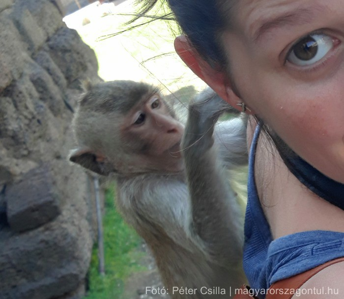 Útitárs majom Thaiföld