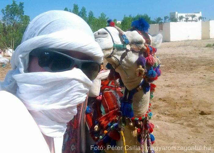 Útitárs teve Egyiptom