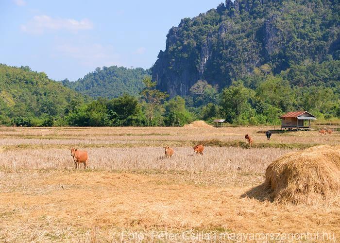 Ban Na falu Laosz 2