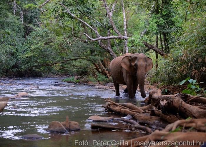 Dzsungeltúra Elefánt Kambodzsa