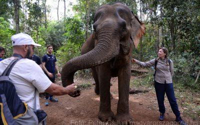 Dzsungeltúra és elefántmentés Kambodzsában